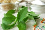 Das Süßungsmittel Stevia